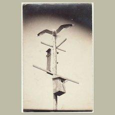Unusual Photo Postcard. Falcon on Birdhouses.