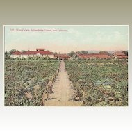 California: Italian-Swiss Wine cellars at Asti. Old Postcard