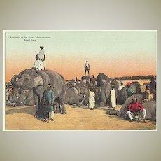 Old India: Elephants of a Nizam. Vintage Postcard