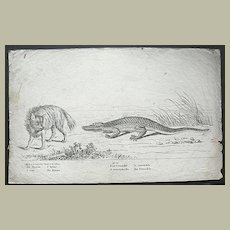 Hyena and Crocodile: Etching from app. 1800