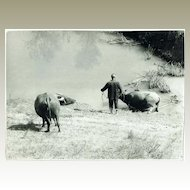 Peasant and Water Buffaloes. Photo from China Cultural Revolution Period