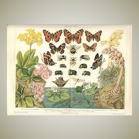 1898: Darwinism. Decorative Chromo lithograph of Insects and Plants.
