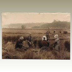 Japan: Tinted Albumen Photo. Farmers at Harvest