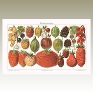 Berries: Old Chromo Lithograph. 1898