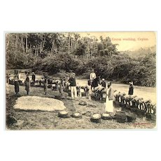 Old Ceylon Postcard: Cocoa Washing