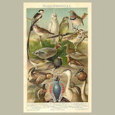Birds, Ducks, Reptils : Two very decorative Chromo Lithographs from 1898