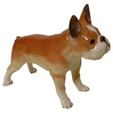 Handsome French Bulldog Russian Lomonosov