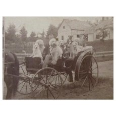 C.1880 RP Stereoview Gentleman In Horse Carriage With Ten Dogs
