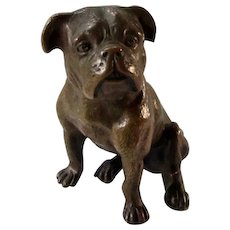 Early Antique Bronze Sitting English Bulldog