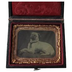 Rare Antique Tintype Photo Of Pug Dog In Case