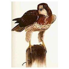 1974 'Birds of Western North America' 1st Ed, DJ, Kenneth Carlson Paintings, Wildlife Art