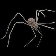 Victorian Hand Painted Realistic Spider