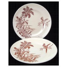 Pair Brown Transfer Plates ~ Parrot with Palm Tree 1880