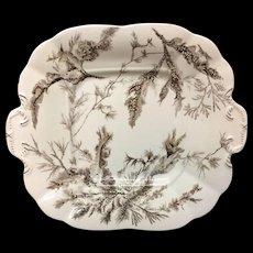 1883 Brown Transferware Biscuit Plate ~ SEAWEED 1883