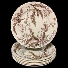 6 ~ Brown Wedgwood Staffordshire Plates ~ SEAWEED 1883