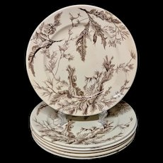 6 ~ Brown Wedgwood Staffordshire Supper Plates ~ SEAWEED 1883