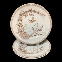 Three Antique Victorian Transferware Plates ~ DRAGONFLY Hawthorn 1890