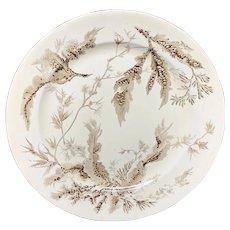Wedgwood Brown Transferware Plate ~ SEAWEED 1883 P