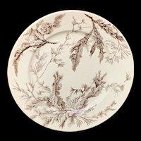 Wedgwood Brown Transferware Plate ~ SEAWEED 1883 R