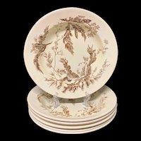 SIX Brown Transfer Printed Wedgwood Bowl Plates ~ SEAWEED 1883