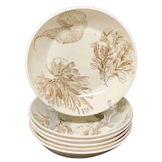 6 ~ Wedgwood Brown Transferware Bowls ~  SEAWEED 1883