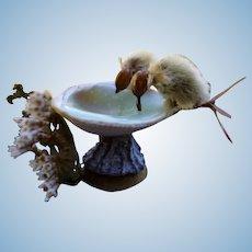 UNUSUAL Dollhouse Miniature BIRD BATH Made of Seeds & Shells