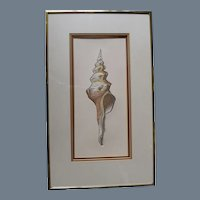 Framed Seashell Hand Colored Engraving, pencil signed, titled and numbered
