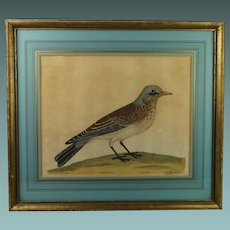 Antique 18th Century Bird Engraving Eleazar Albin Natural History of Birds Circa 1731