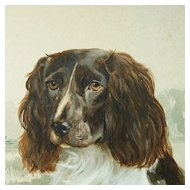 Vintage Dog Portrait Watercolor Painting Springer Spaniel By Reuben Ward Binks 1922