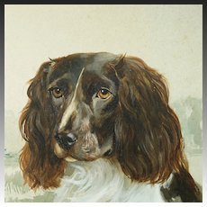 Vintage Dog Portrait Watercolor Painting Springer Spaniel By Reuben Ward Binks 1922