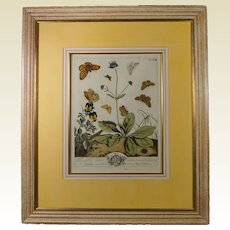 18th Century Hand Colored Botanical Engraving Moses Harris Insect Butterfly English Circa 1766 Plate XXVIII