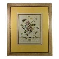 Georgian Botanical Engraving Moses Harris Insect Butterfly English Circa 1766 Plate XLI, Modern frame