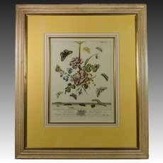 Antique 18th Century Hand Colored Botanical Copper Plate Engraving Moses Harris Insect Butterfly English Circa 1766 Plate XLI