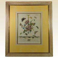 Georgian Botanical Engraving Moses Harris Insect Butterfly English Circa 1766 Plate XLI