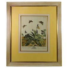 Moses Harris The Aurelian 18th Century Hand Colored Butterfly Engraving English Circa 1766 pl XVI