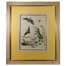 18th Century Botanical Engraving Moths, Moses Harris, English Circa 1766 pl XXI, Modern frame
