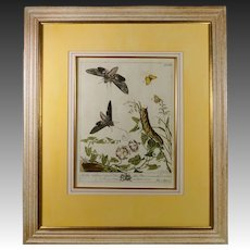 18th Century Moses Harris Botanical Hand Colored Copper Plate Engraving Moths English Circa 1766 pl XXI
