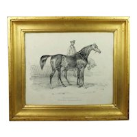 Antique French 19th Century Horse Engraving 'Shakespeare', Superb Lemon Gilt Frame Circa 1840 Horse Racing