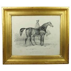 French 19th Century Horse Engraving 'Shakespeare' Superb Lemon Gilt Frame Circa 1840 Horse Racing