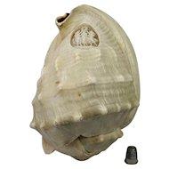 Antique Carved Conch Shell Cameo Three Graces Circa 1910 Marine Nautical