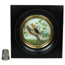 19th Century French Miniature Bird Painting On Glass Feather Picture Napoleon III Era Circa 1860