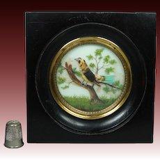 19th Century French Miniature Bird Painting On Glass Feather Picture Napoleon III Era Circa 1860