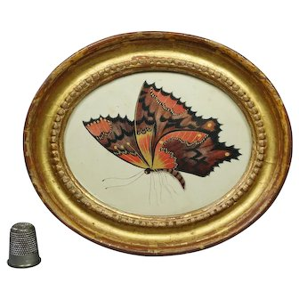 Gorgeous 19th Century Regency Miniature Painting Butterfly Watercolor Oval Frame Circa 1810