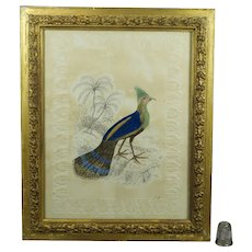 Georgian 19th Century Ho Ho Bird Watercolor Painting Embossed Paper Circa 1830, Signed SD