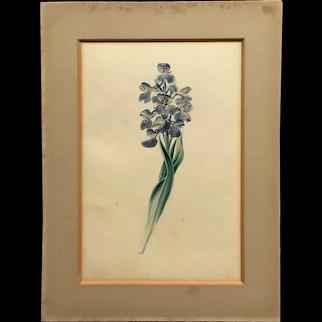 Original 19th Century Regency Watercolor Orchid Flower, Botanical Painting, English C 1819