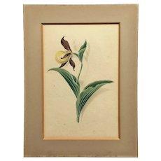 Original 19th Century Regency Watercolor Iris Flower, Botanical Painting, English  C 1819.