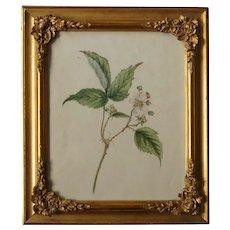 19th Century Botanical Painting, English Watercolor Blackberry Blossom, Bramble 1864