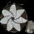 Antique Quaker Beaded Pin Cushion, ORIGINAL Circa 1840