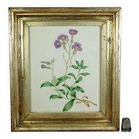 19th Century Georgian Watercolor Purple Flowers Lemon Gilt Frame Floral Circa 1830