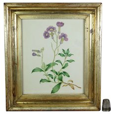 19th Century Georgian Watercolor Purple Flowers Lemon Gilt Frame Floral Circa 1830